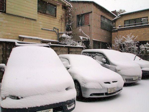 駐車中の車も雪化粧