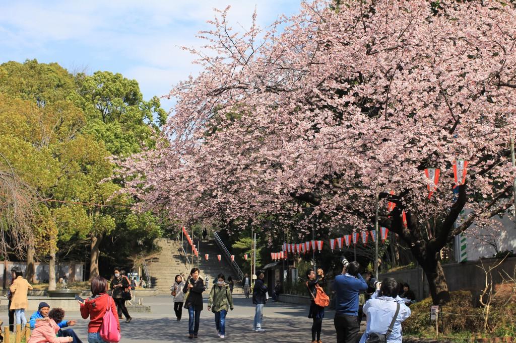 恩賜公園の入口の桜は見事だった
