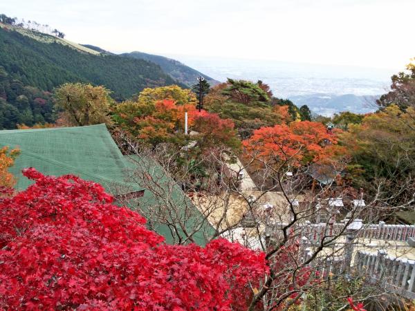 大山のふもとにある阿夫利神社付近。かなり色付いていた。
