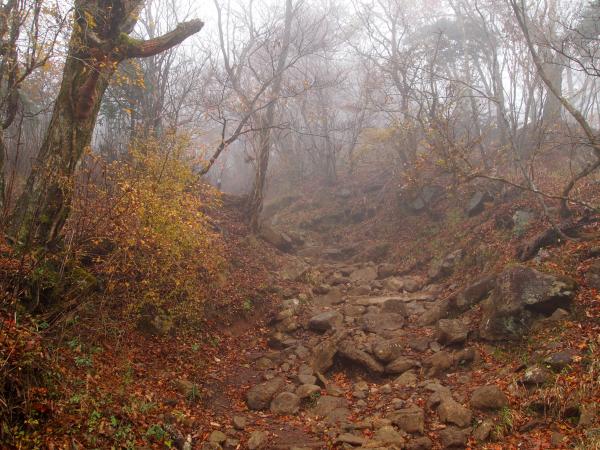 この日は山頂に近づくにつれ、靄がすごかった。