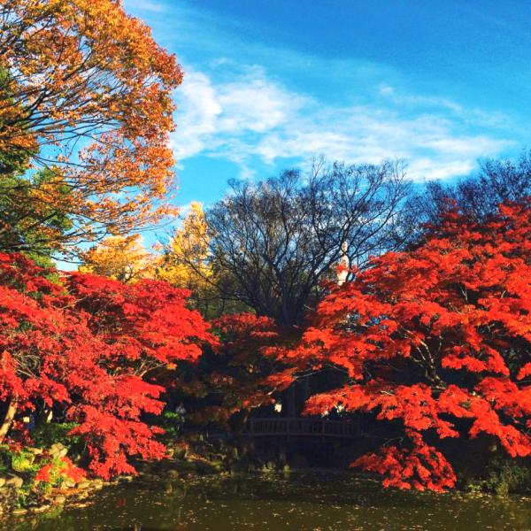 雲形池の紅葉。鮮やか。