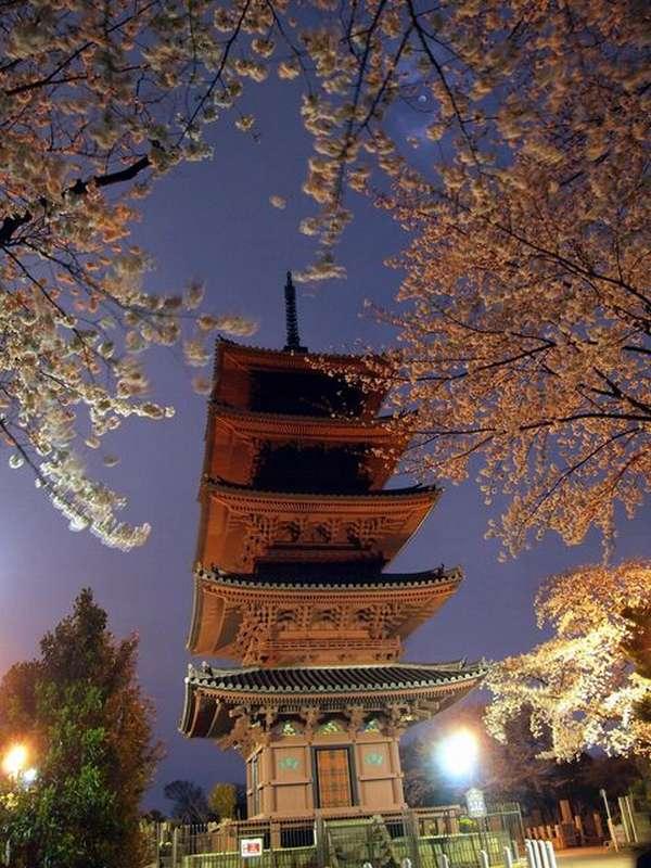 春の池上本門寺。夜桜が素晴らしい。