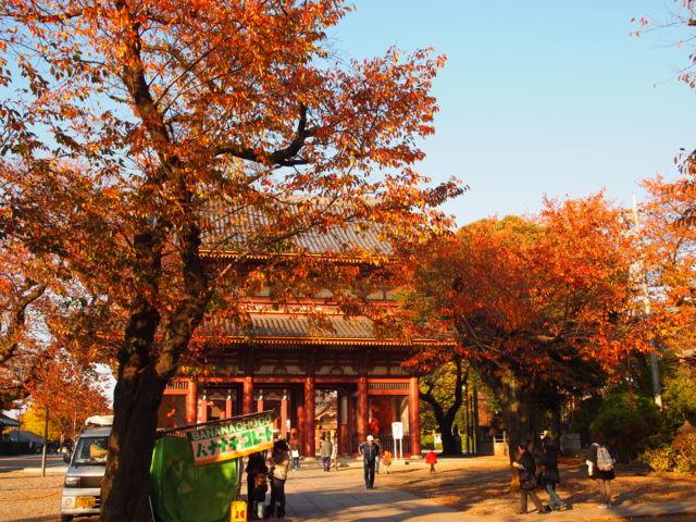 秋の池上本門寺。紅葉。