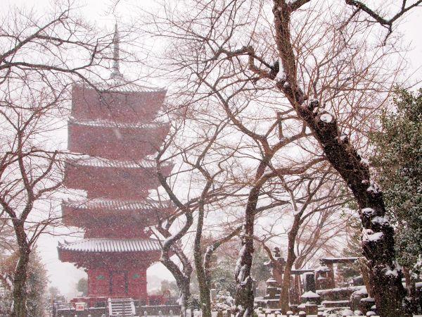 冬の池上本門寺。雪化粧。