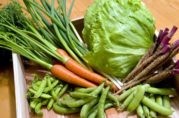 季節の京野菜。