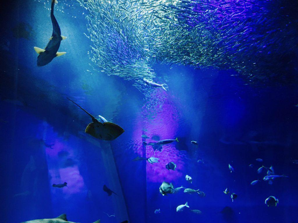 サメが泳ぐ真上でイワシの群れが泳ぐ。ライトが幻想的