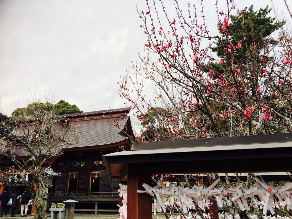 ふと見ると梅の花が。もうすぐ春ですね