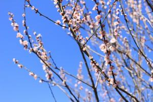 花も見ごろ。良い季節です
