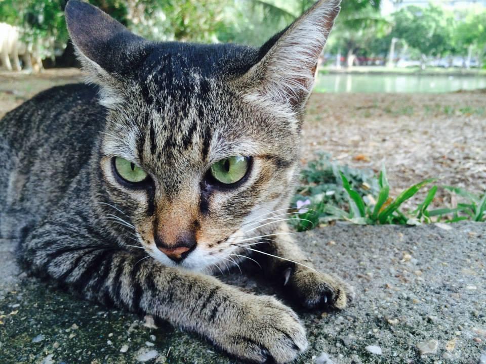 園内には可愛い猫も(たぶん野良)