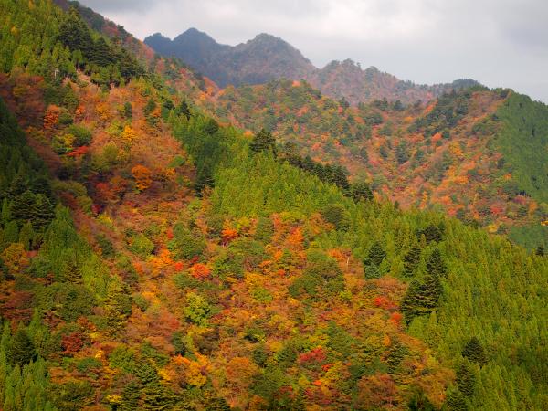 四季も鍋も日本の魅力。