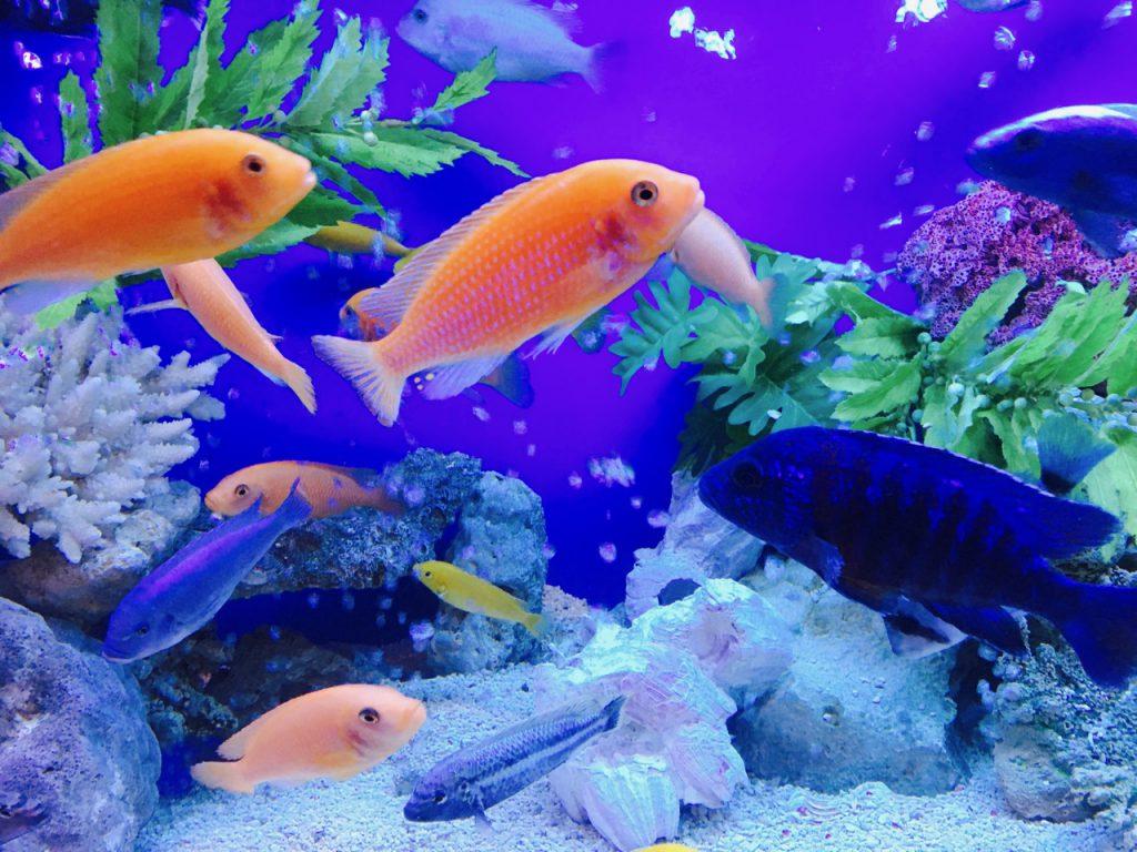 色とりどりの魚がスイスイと泳いでいました
