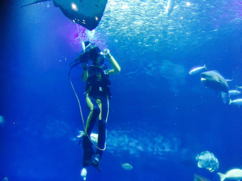 ダイバーさんが水中で魚について解説してくれるコーナーも